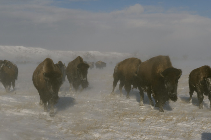 Buffalo_Winter_Storm_2017