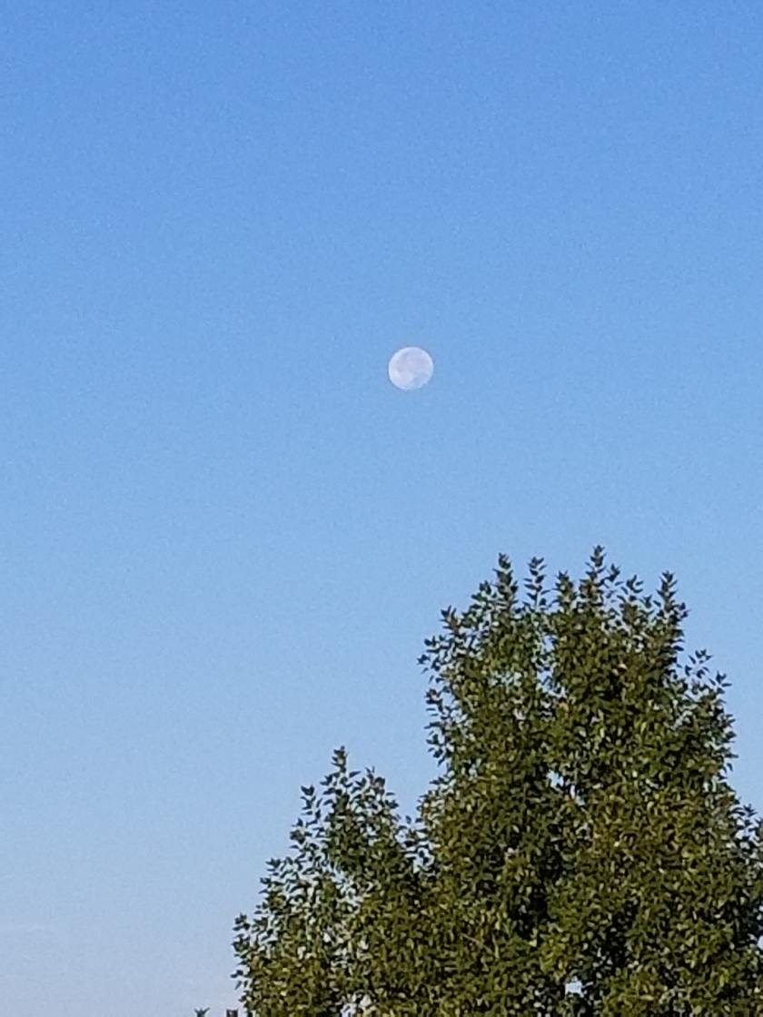 Morning moon 2