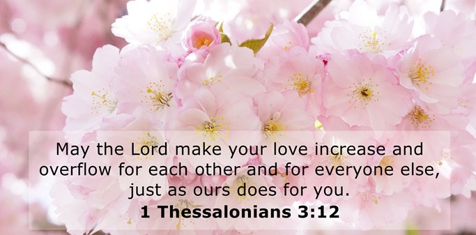 1 Thessalonians 3 v 12 flowers