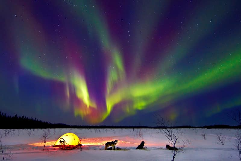 Alaska northern lights with dogs