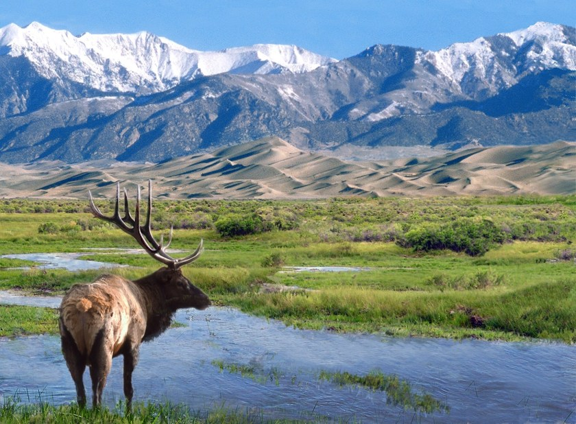 Great Sand Dunes NP elk