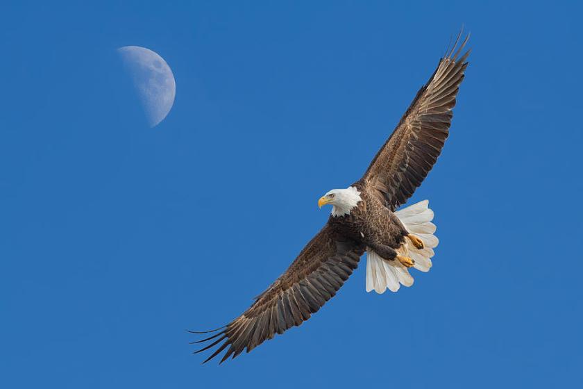 Soaring Eagle 2