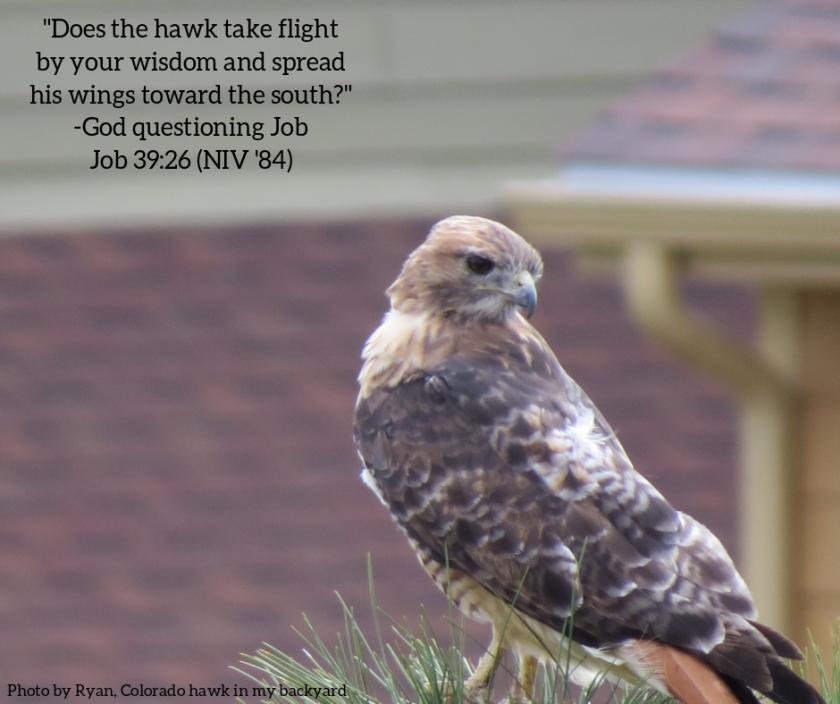 Pic quote Job 39 v 26