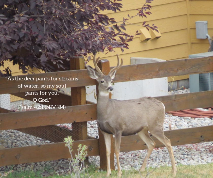 Pic quote Psalm 42 v 1 deer