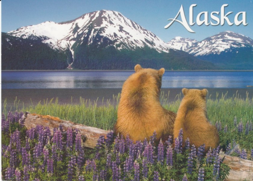 Alaska bear friends
