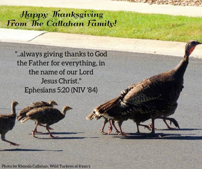 Pic quote Ephesians 5 v 20 turkeys