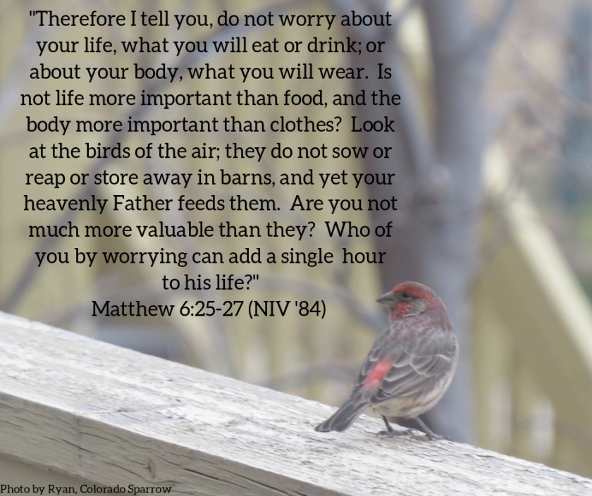Pic quote Matthew 6 v 25
